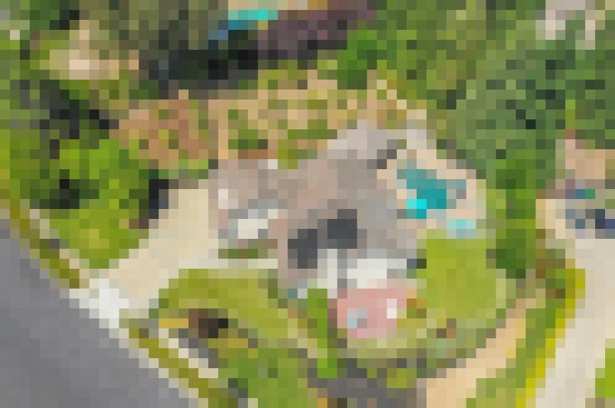 7971-Foothill-Knolls-Dr-Pleasanton-52-of-55-1560016896-2560x1700