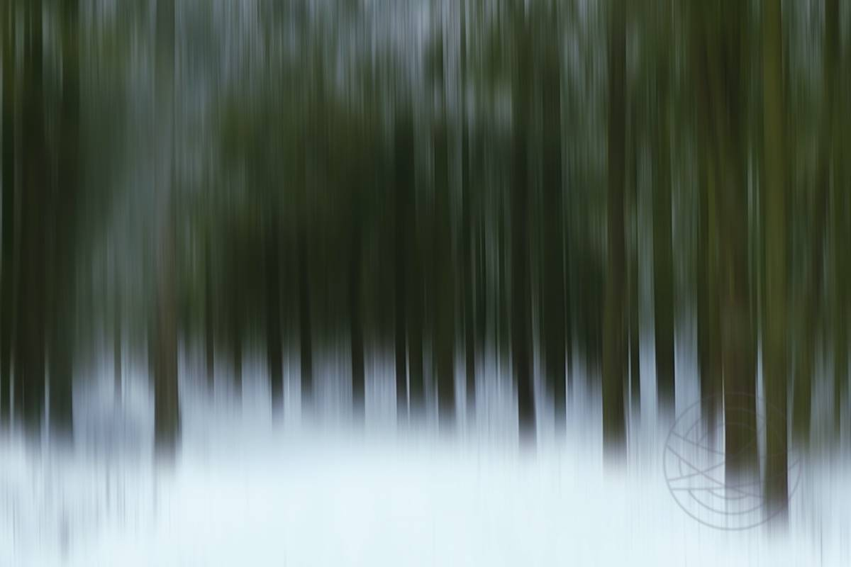 A Carpet Of Silence - Abstract realistic fine art forestscape photography by Jacob Berghoef