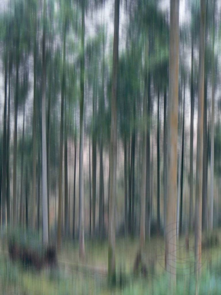 At Daybreak - Abstract realistic & impressionistic fine art forestscape photography by Jacob Berghoef