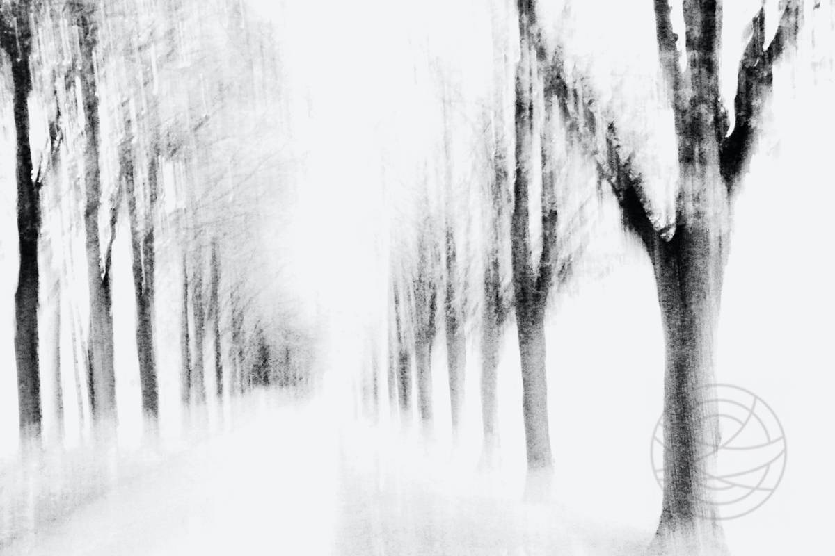 Light Of My Thoughts - Abstract realistic fine art forestscape photography by Jacob Berghoef