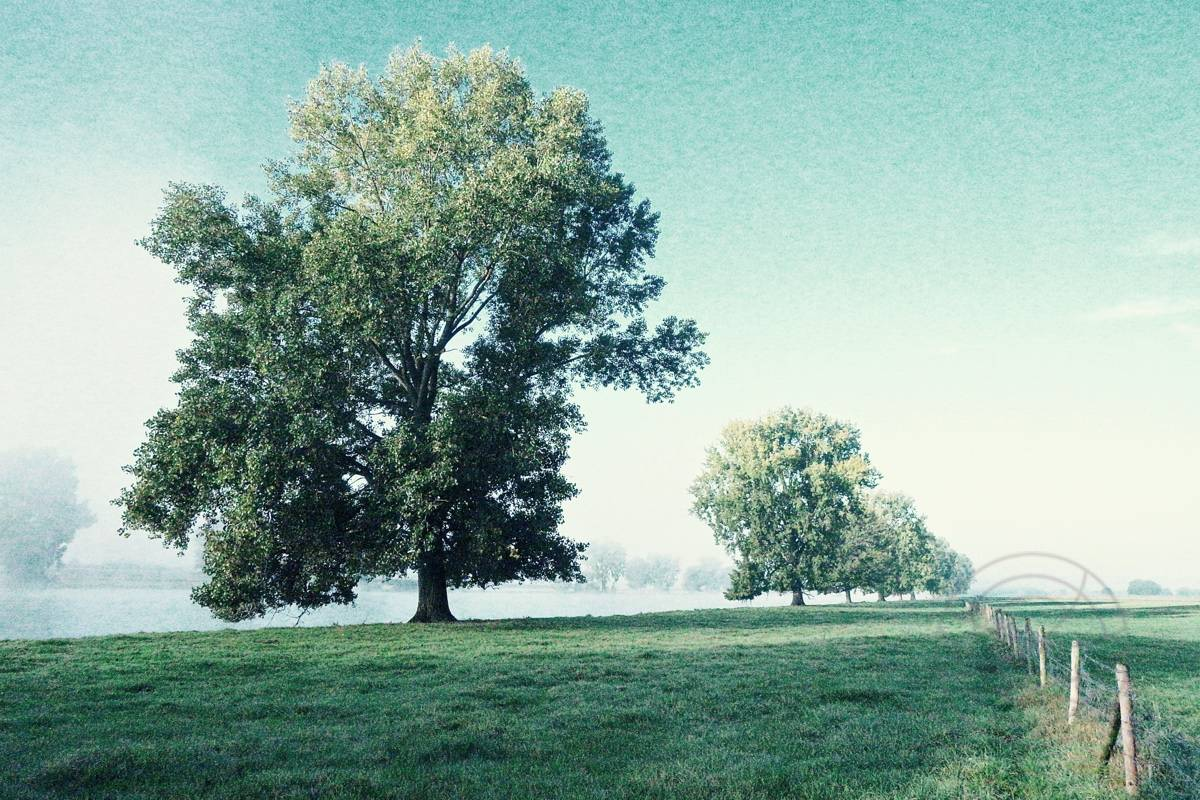 Shivering Trees In Morning Haze (1) - Impressionistic fine art landscape photography by Jacob Berghoef