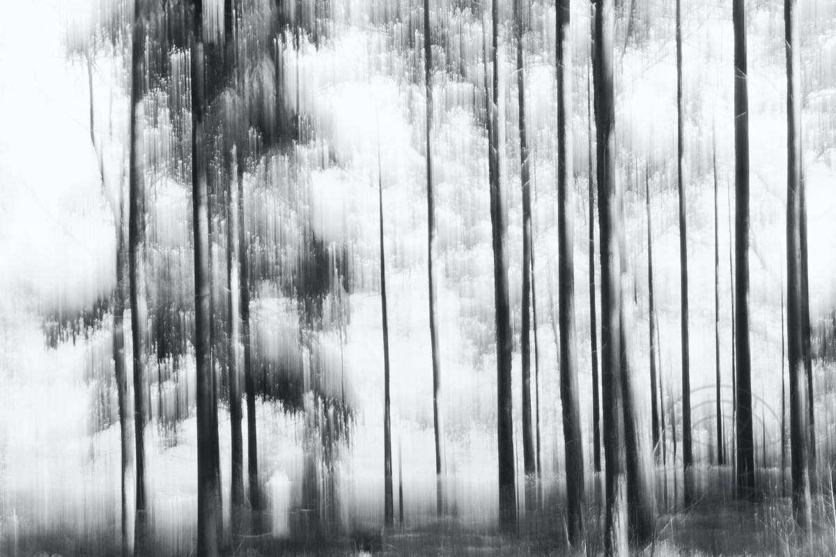 Sunny Winter Day - Abstract realistic fine art forestscape photography by Jacob Berghoef