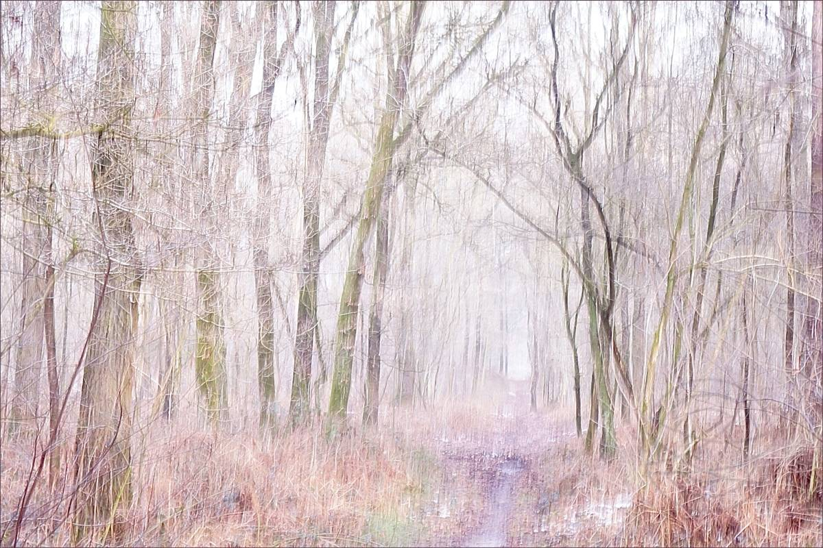 Yawning Winter Morning - Abstract realistic fine art forestscape photography by Jacob Berghoef