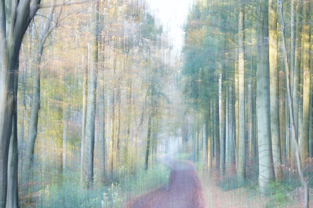 Song Of The Leaves - Impressionistic fine art forestscape photography by Jacob Berghoef