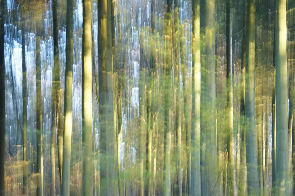 The Last Light - Impressionistic fine art forestscape photography by Jacob Berghoef