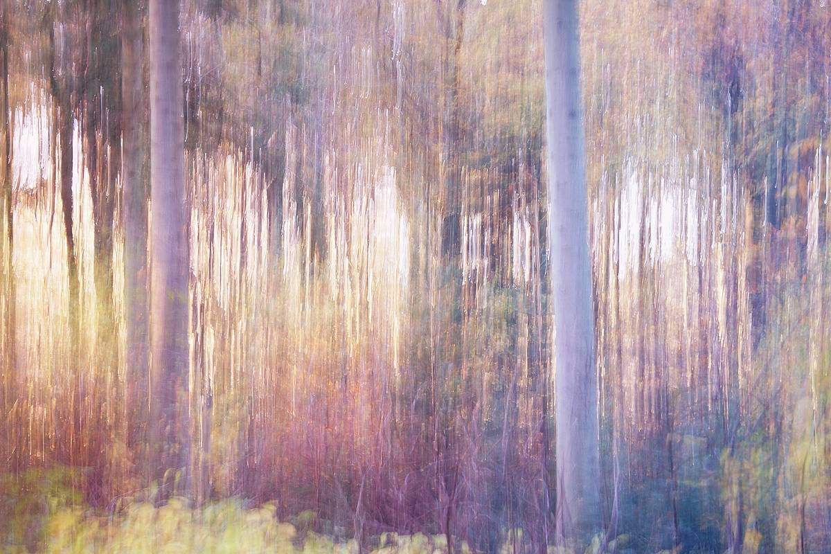Autumn Evening - Impressionistic fine art forestscape photography by Jacob Berghoef