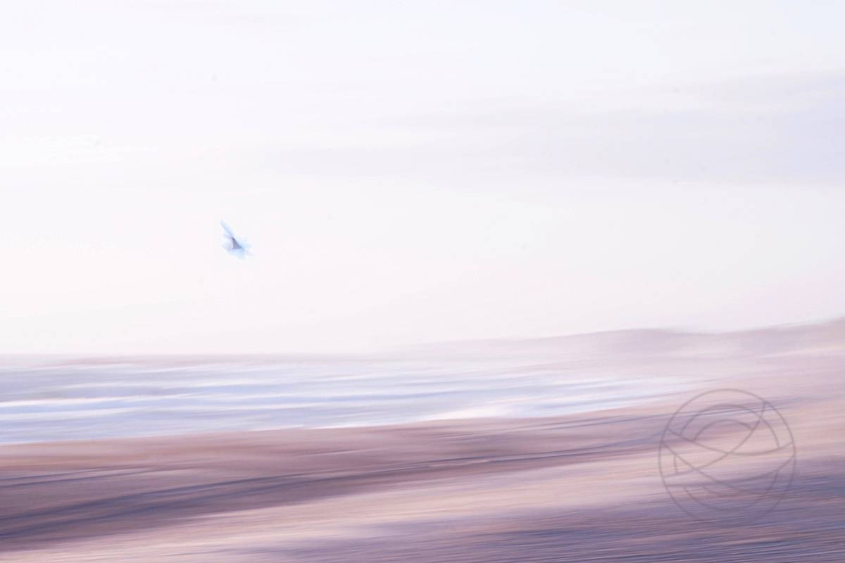 Echo Of Freedom - A seagull flies over the beach to the sea - Abstract realistic fine art seascape photography by Jacob Berghoef