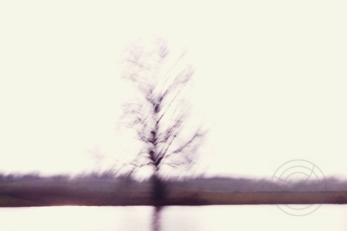 River Dance (2) - A naked winter tree on the border of a river - Abstract realistic fine art landscape photography by Jacob Berghoef