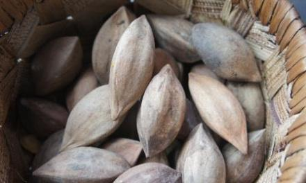 Leadership Secrets from Albay: Pili Nut Crackers