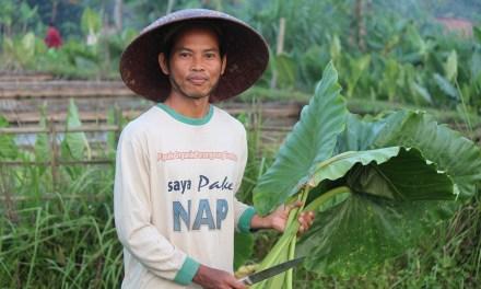 Paano Ba Magtanim ng Tagumpay