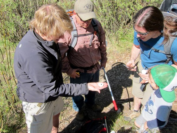 Examining native Bombus sp. with Sierra Nevada Journeys and Daugherty Scholars