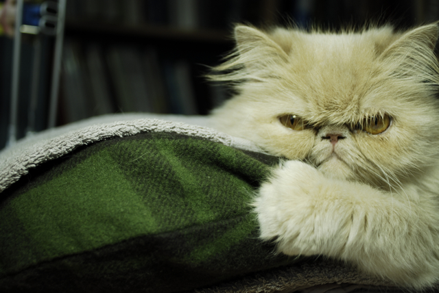 Frowning cat