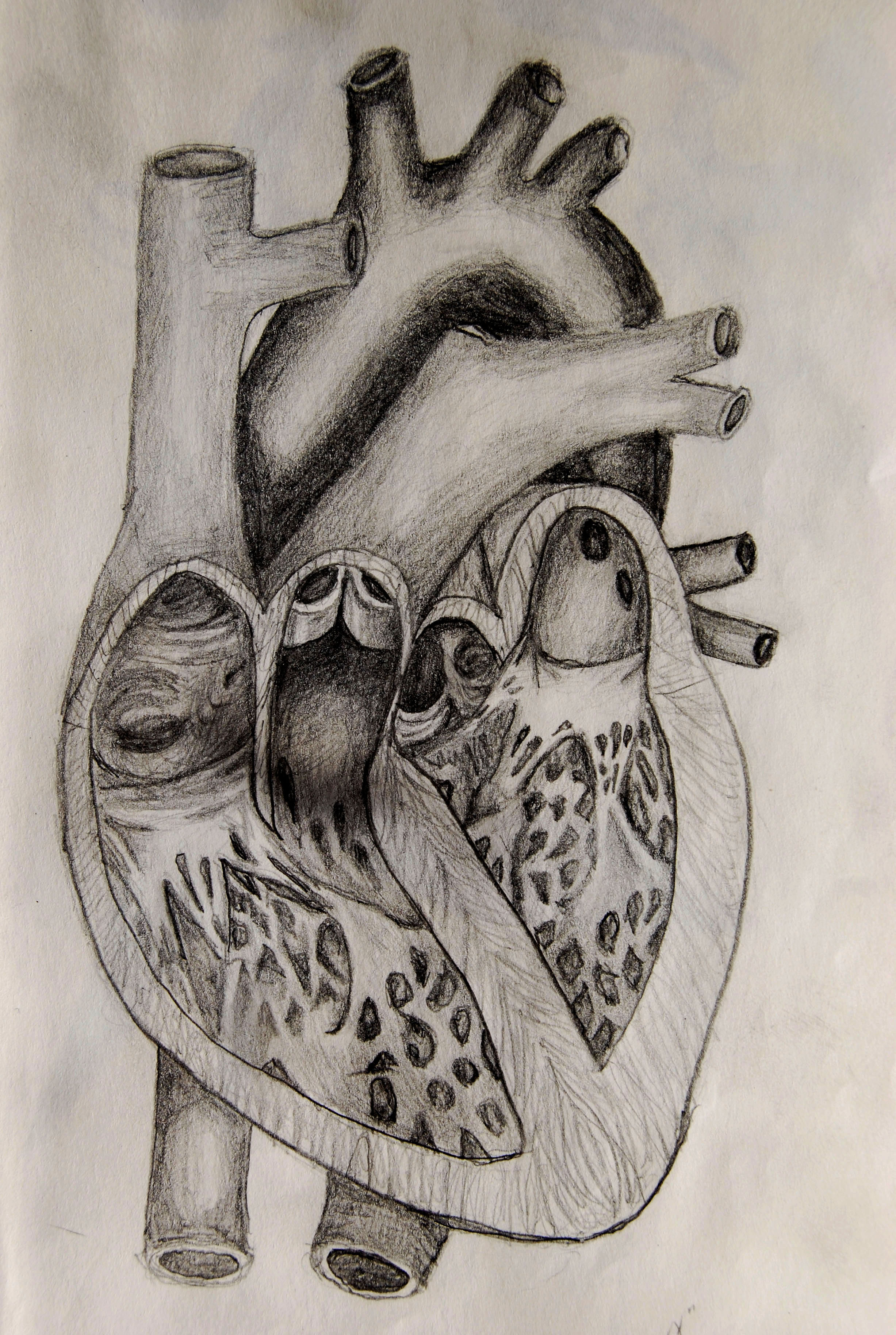 realistic heart diagram fender guitar wiring diagrams the gallery for gt real drawing