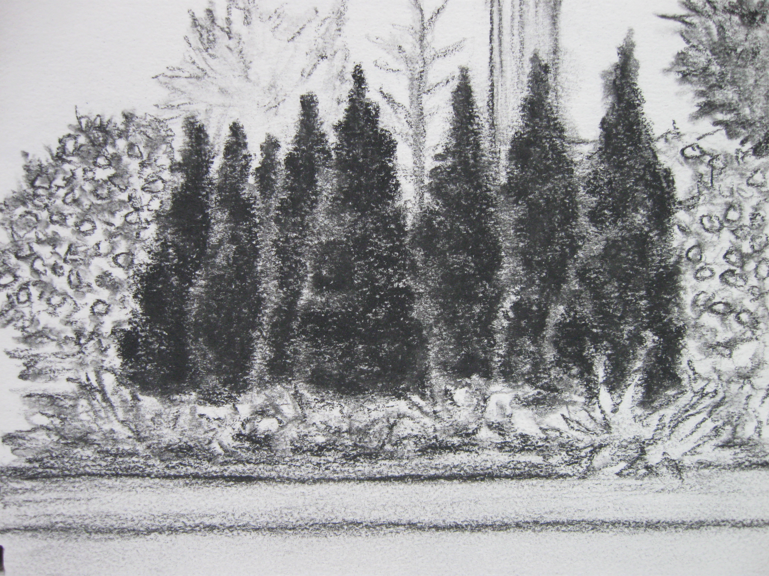 Rowes Wharf Planting (charcoal)