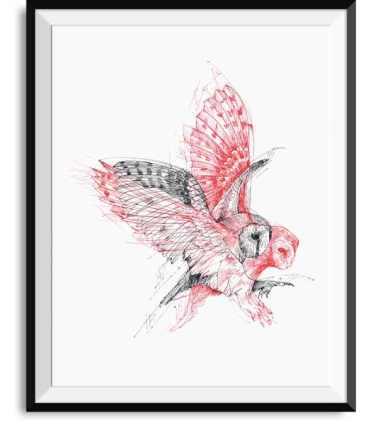 01_alfred-basha_owl-motion