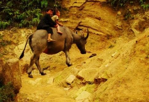 Two boys herding a buffalo up the mountain.