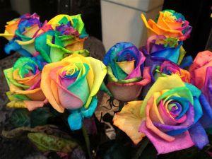 full_150581_xcitefun-rainbow-roses-2_1306024501