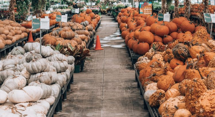 Cornelius Nursery Pumpkin Selection
