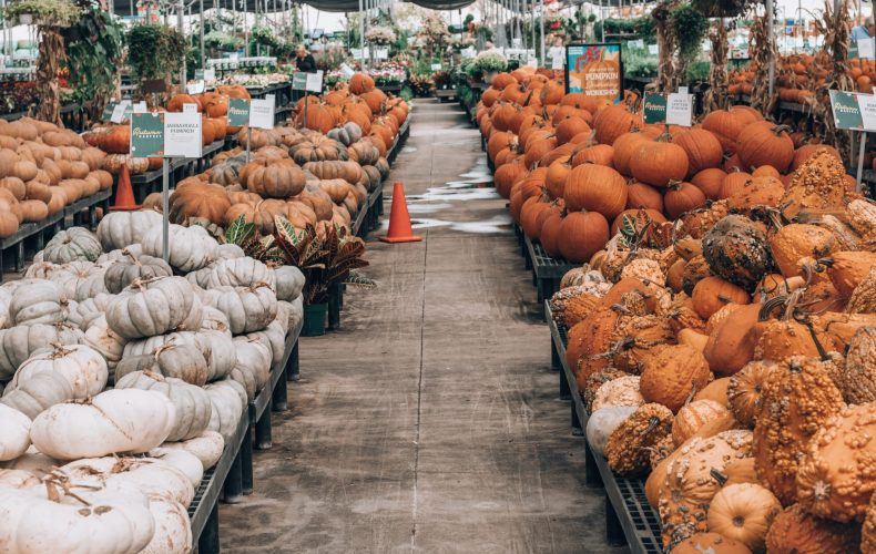 Cornelius Nursery Pumpkin Selection