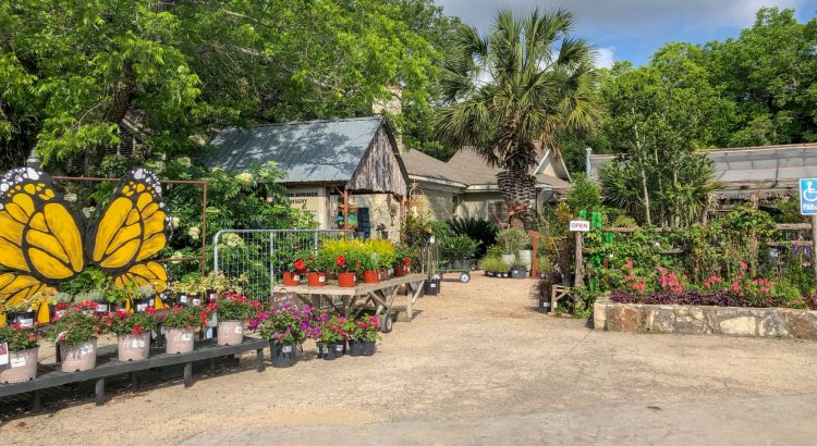 The best nurseries in Austin, Texas, to get high quality plants and high quality pictures!