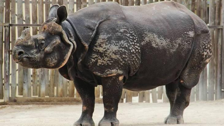 Histoire du rhinocéros du Château d'If