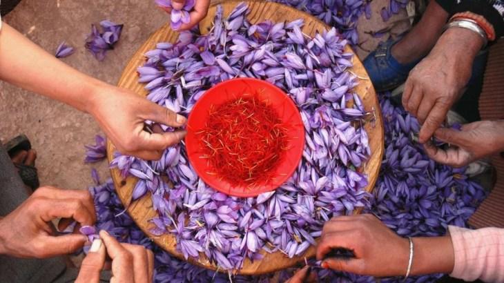 Le safran, épice la plus chère du monde