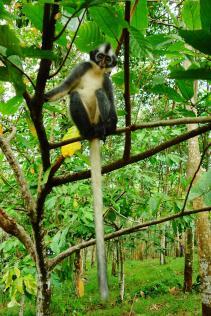 encore un thomas lea monkey