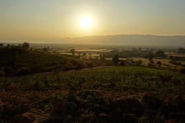 Sunset above the wineyard