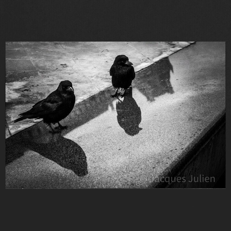 Black bird art Photography B&W