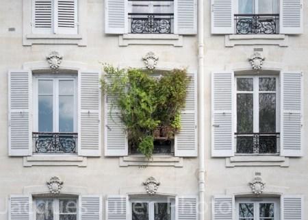 Fenêtre avec débordement de plantes vertes