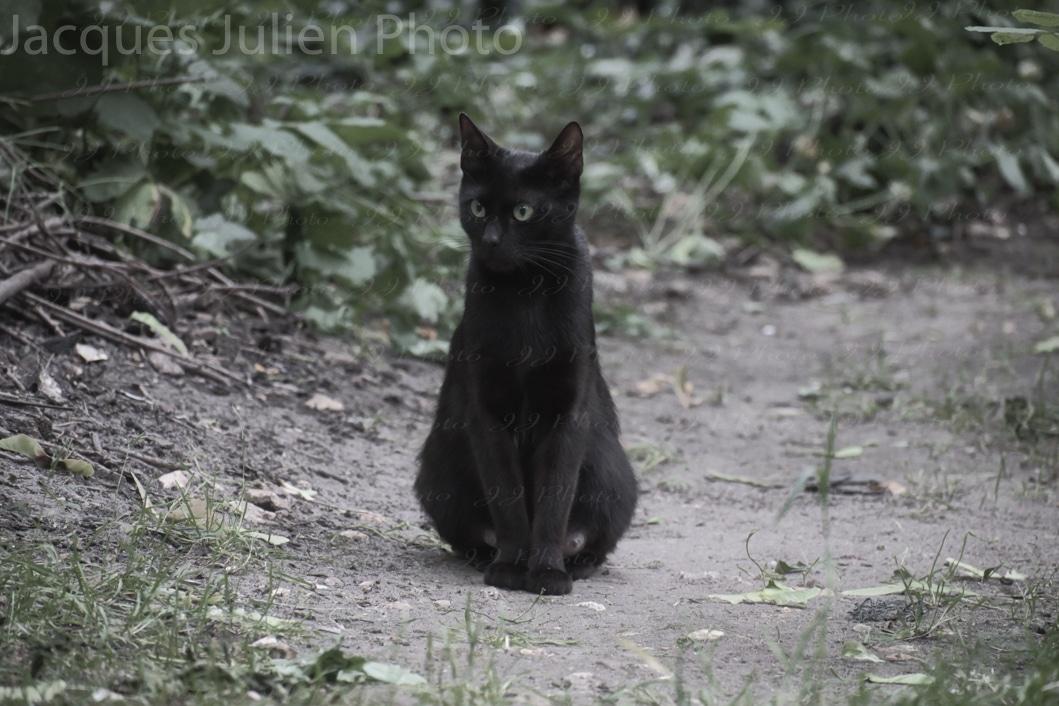 Stray cat dark photography