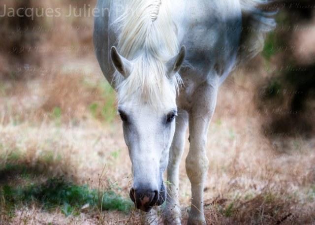 White Horse – Stock Photo