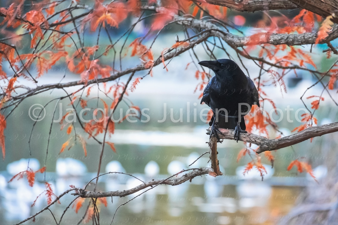 autumn image bird with red leaves