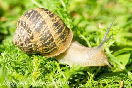 Garden snail – Macro photo