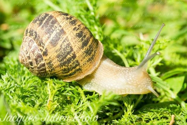 photo macro d'un escargot sur l'herbe