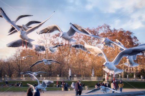 Group Of Gulls In Flight – Stock Photo