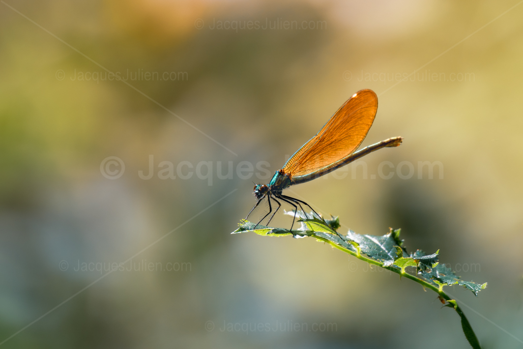 orange flying insect
