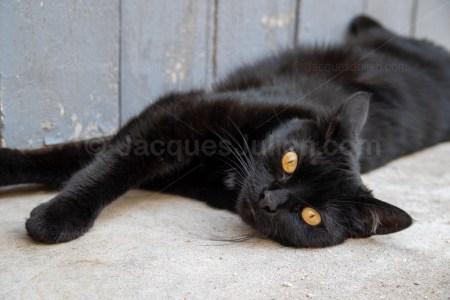 Young black cat