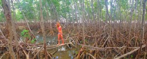 Evie Flaugh balances her way through a mangrove forest, 2012. Martin County. (Photo credit Jenny Flaugh)