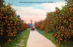 All postcards of citrus industry in Florida, ca. 1912. (Collection of Sandra Henderson Thurlow.)