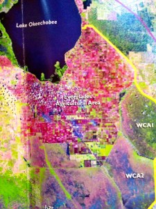 The red colored blocks south of Lake O. are the EAA-700,000 acres of sugar lands and vegetables. South of the EAA are the water conservation areas.(SFWMD map, 2012.)