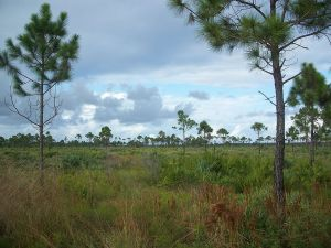 Savanna State Park, Martin and St Lucie Counties. (Photo from their website.)