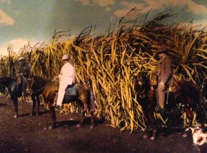 Sugar Cane historic postcard, ca. 1906. (Thurlow Collection.)
