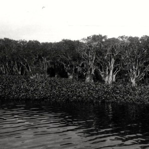 Florida Memory Project, photo by John Kunkel Small 1869-1938.