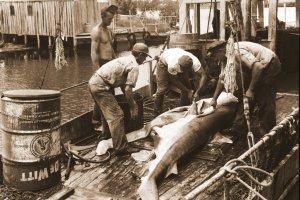 Shark Industry, Port Salerno. (Photo courtesy of Sandra Henderson Thurlow)