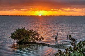 Mangrove Indian River Sunrise, John Whiticar.
