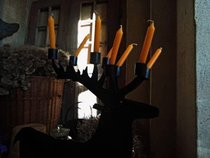 Kiedyś zapłoną jelenie rogi