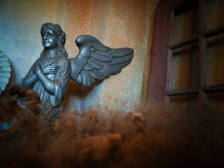 Puchu anielskiego