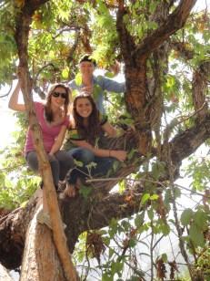 Tree lovers!