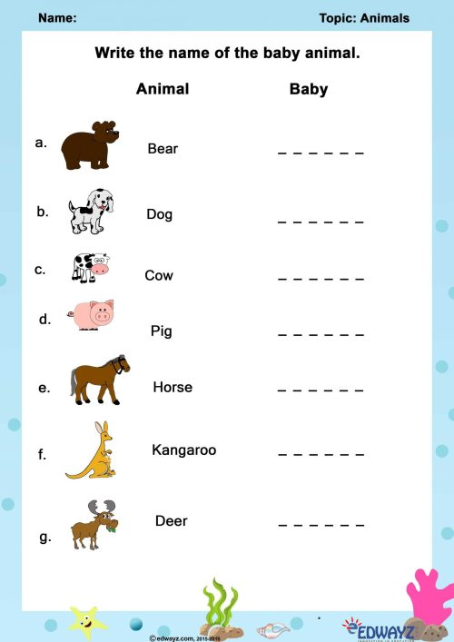 small resolution of Zoo Animal Classification Worksheets   Printable Worksheets and Activities  for Teachers